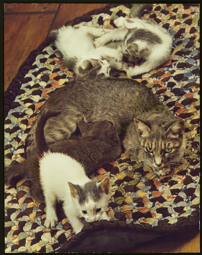 A cat and her kittens - Learn Spanish with pictures ...