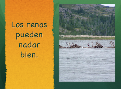 Free Spanish winter activities like this presenation on reindeer use science vocabulary in natural ways.