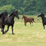 Let's talk about a picture of horses in Spanish - Hablemos de una foto de caballos