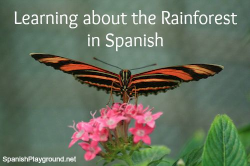 Rainforest activities for children learning Spanish teach language, culture and geography.