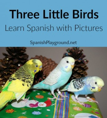 Kids learn Spanish with these questions about a picture of birds.