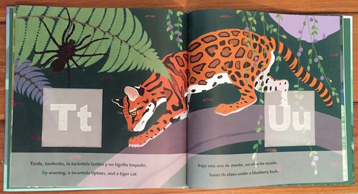 Olinguito is a Spanish alphabet book that introduces children to the cloud forest of Ecuador.