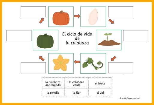image regarding Pumpkin Life Cycle Printable called Pumpkin Things to do inside Spanish - Spanish Playground