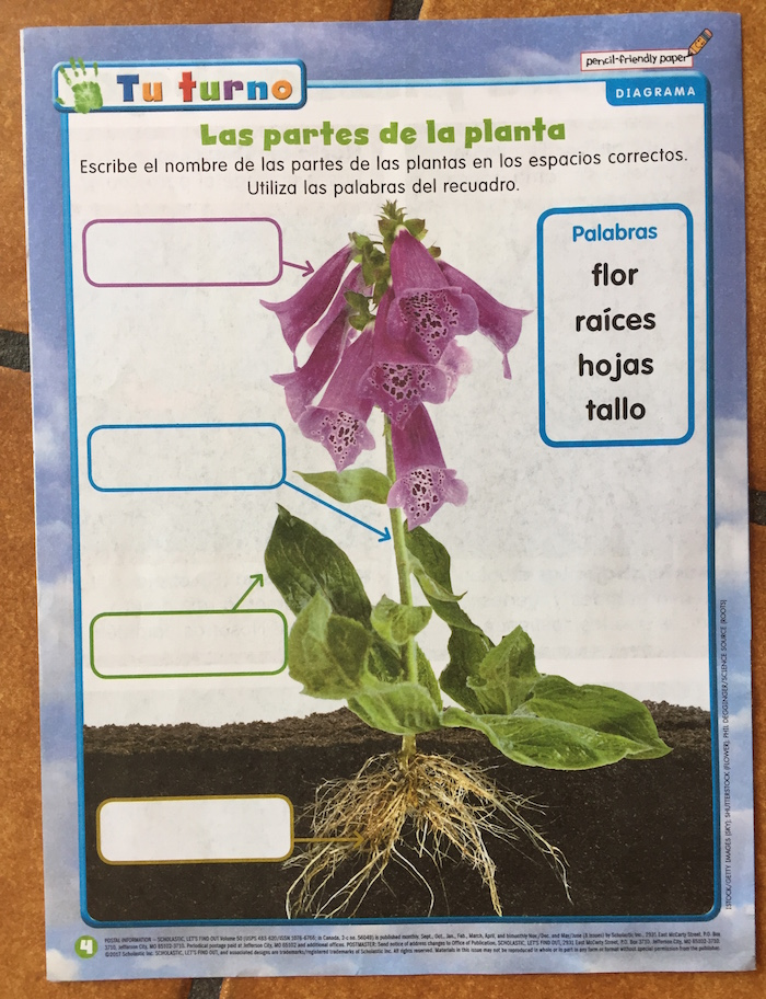 Simple activities in the Spanish weekly reader engage children with language.