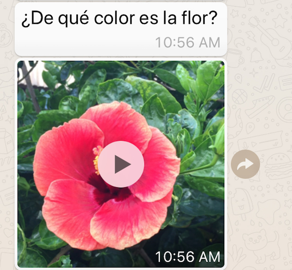 Use short videos to learn Spanish on your phone.