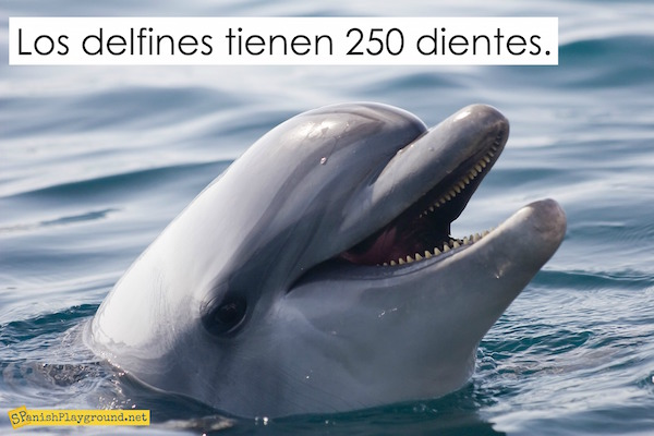 Photos with text are good dolphin activities in Spanish for kids.