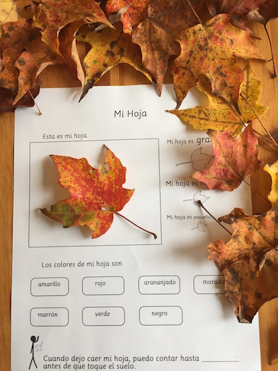 Learn about leaves and plants with these Spanish science lessons for elementary students.