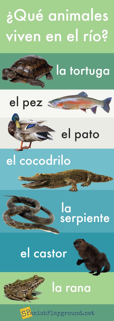 Learn Spanish vocabulary for animals that live in a river.