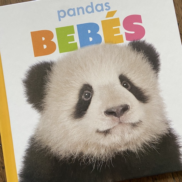 Cover of nonfiction Spanish book about Pandas from Creative Education.